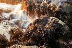 Rocas-5 (patohp1970) Tags: chile pichidangui mar rocas velo cochayuyo
