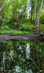 Woodstock Farm Bellingham WA USA-26 (Yasu Torigoe) Tags: bellingham washington unitedstates us
