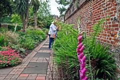 Meeting Sarah (Jainbow) Tags: sarah friend chi chichester gardens flowers foxgloves bishopspalacegardens wall jainbow