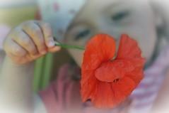 """Zitat: """"Es gibt kein Alter in dem alles so irrsinnig intensiv erlebt wird wie in der Kindheit. Wir Großen sollten uns daran erinnern, wie das war!"""" (Astrid Lindgren) (Uli He - Fotofee) Tags: ulrike ulrikehe uli ulihe ulrikehergert hergert nikon nikond90 fotofee burghaun kindertagespflege mai frühling garten wasser sommer temperatur sommertemperatur hitze blumen sommerblumen mohnblumen margerithen historischereisenbahnwaggon eisenbahnwaggon radweg kegelspielradweg sandkasten"""