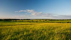 Field (Sergei Kolesnikov) Tags: kaluzhskayaoblast russia ru