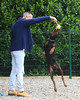 DOBERMANN RESCUE UNITED KINGDOM AND EUROPE REGISTERED CHARITY 1169697 (Gary K. Mann) Tags: dobermannrescueunitedkingdomeuropecharity doberman dobermann dog rescue charity forever homes needed drue