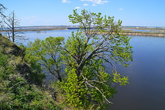 Half of the crown (МирославСтаменов) Tags: russia zhiguli mogutova tree linden crown volga river edge overlook
