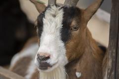 Animal life in Pairi Daiza (Alexander Urdiales) Tags: pairidaiza belgium zoo animals nature birds mammals animalkingdom