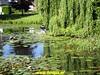 "2018-06-06     10e  Utrechtse- Heuvelrugtocht   24 Km (8) • <a style=""font-size:0.8em;"" href=""http://www.flickr.com/photos/118469228@N03/27757927277/"" target=""_blank"">View on Flickr</a>"