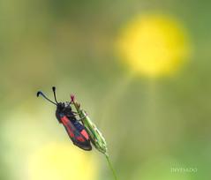 tomando-el-sol (invesado) Tags: nikond750 tamron90 rivas macro luz insectos verde amarillo naturaleza ambiente