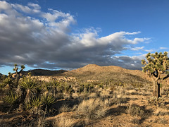 IMG_2767 (emilie raguso) Tags: joshuatree california cali socal southerncalifornia hiking nature nationalpark