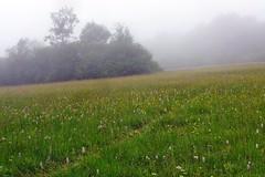 der Pfad durch die Sistig-Krekeler-Heide (mama knipst!) Tags: sistigkrekelerheide pfad nebel fog eifel juni natur