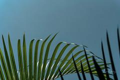 Delicacy 1 (Enio Godoy - www.picturecumlux.com.br) Tags: niksoftware blue minimalism details sonyalpha bluesky green dincao viveza265112911101413213 sky sony baurusp foliage sonyalpha6300 macro delicacy macromindays ciel sunlight colorful naturephotography