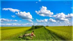 Homeland (Peter Daum 69) Tags: heimat homeland landschaft landscape scenery farbe color wolken clouds wiese felder weg way harmony dream traum himmel heaven grün gras photographer fotografie photoart
