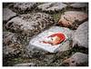 La tête au ras du lichen (Jean-Marie Lison) Tags: bruxelles placedesmartyrs pavés lichen sculpture incrustation