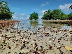 sea shore mangrove (louise peters) Tags: mangrove eb lowtide zanzibar afrika africa seashore kust strand beach ocean indianocean indischeoceaan zand sand tree bomen trees sky clouds wolken wolkenlucht mangapwani