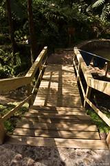 Steps to the Hot Springs (David J. Greer) Tags: sailtrainexplore rubicon3 san miguel azores portugal winter travel adventure centro de interpretação ambiental da caldeira velha poca dos fetos stairs hot pools thermal springs