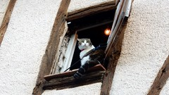 Le Chat (Eddy Allart) Tags: cat kat poes katze gato gatito cordes france raam ventana looking out window french