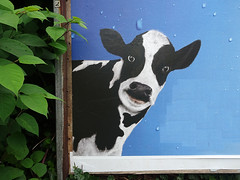 Good Morning (peterpe1) Tags: peterpe1 flickr poster plakat advertisement werbung kälbchen kuh cow