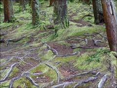Natural graphics (Armelle85) Tags: extérieur nature macro arbre mousse racine sol parc graphisme