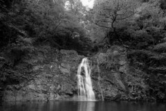 Ceunant Llennyrch (mattwells1986) Tags: sinar f1 ilford delta 100 epson v700 outdoor landscape forest woodland waterfall fall water watercourse stream 4x5 largeformat film black white mono monochrome ilfosol rock schneider super angulon 90mm lens f 56 wales north snowdonia nationalpark temperaterainforest celticrainforest river