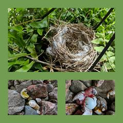 Horrible Happenings (Just Say Jules!) Tags: stuffonmyfrontporch birds eggs birdnest brokeneggs sadness