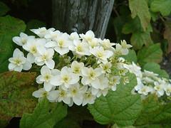 0525DSCF000010 stapo (UJIKE Norio) Tags: kagawa zentsuji japan flower fujifilm finepix f401 smartmedia startingpoint 哲学入門