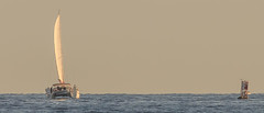 Sail off Balboa 2015 IV (JM L) Tags: sailing newportbeach catamaran balboa orangecounty buoy