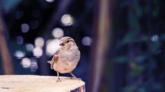 Little Bird (YᗩSᗰIᘉᗴ HᗴᘉS +17 000 000 thx) Tags: bird oiseau pairidaiza zoo hensyasmine namur belgium europa aaa namuroise look photo friends be wow yasminehens interest intersting eu fr greatphotographers lanamuroise tellmeastory flickering