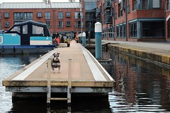 Sod off. (ianmiller6771) Tags: canal boats water smalldog belligerent attitude pontoon fuji aggression 50mm redbrickbuildings expression ladder reflections