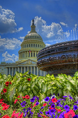 US Capitol & Water Fountain (paint filter) (cmfgu) Tags: washingtondc dc districtofcolumbia capital usa us unitedstatesofamerica american capitol building dome waterfountain flowers capitolhill craigfildesphotography artist artistic photographer photograph photo picture art craigfildesfineartamericacom fineartamericacom craigfildespixelscom prints wall canvasprint framedprint acrylicprint metalprint woodprint greetingcard throwpillow duvetcover totebag showercurtain phonecase mug yogamat fleeceblanket spiralnotebook sale sell buy purchase gift hdr highdynamicrange underpainting filter