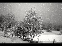 Tombe la neige ... (jnoel.camilleri) Tags: neige arbres noiretblanc hiver froid blackandwhite snow landscape nature paysage trees