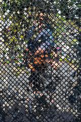 Diamond Mirror Mosaic (Matt Molloy) Tags: mattmolloy photography mosaic mirror diamonds squares pieces cut broken lines dirty grime wall reflection me myself trees street abstract chiangmai thailand lovelife