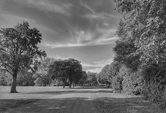 An evening stroll!😊🌞😊 (LeanneHall3 :-)) Tags: blackandwhite mono walkway trees treetrunks branches leaves sky eastpark hull kingstonuponhull samsung
