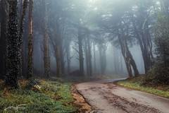 Foggy day... (jorgeverdasca) Tags: magiclight winter trees darklight dark gothic goth woodland wood forest landscape foggy fog mist sintra portugal canonphoto canon5dmk4