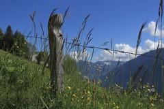 prairie à Mex (bulbocode909) Tags: valais suisse mex montagnes nature prairies poteaux fleurs nuages arbres vert bleu jaune printemps