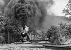 Roll Coal (Nolan Majcher) Tags: nw 611 norfolk western j class 484 shawsville va virginia christiansburg mountain district steam locomotive