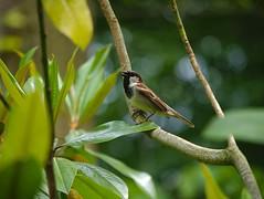 P1100325 (Jasardpu) Tags: zoo karlsruhe vogel tier animal bird