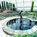 Sunken Garden, Como Conservatory 5/18/18 #comozoo #mysaintpaul