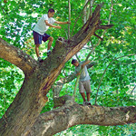 Boys in the Branches thumbnail