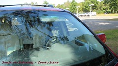 Dog at the Wheel (Smile) (PDX Bailey) Tags: smileonsaturday comicscene driving dog drive smile saturday comic scene