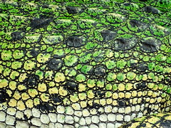 Living Fossile (The-Beauty-Of-Nature) Tags: summer june juni nature germany deutschland plants pflanzen green grün lush sunny sun sonne sonnig warm stuttgart wilhelma botanic garden botanischer garten zoo