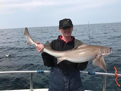 "Michael Shipway -  SmoothHound • <a style=""font-size:0.8em;"" href=""http://www.flickr.com/photos/113772263@N05/41813249935/"" target=""_blank"">View on Flickr</a>"