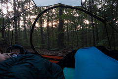 Sunrise through the bug mesh on our tent (Ozarks Walkabout) Tags: camping marktwainnationalforest gsa missouri tent wildcamping solareclipse2017 ozarktrail fujifilmxe2s berrymantrail backpacking muthahubbatent potosi unitedstates us