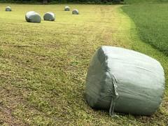 Shades of Green (Rosmarie Voegtli) Tags: sooc iphone bauer handcraft farmer work arbeit green harvest ernte dornach