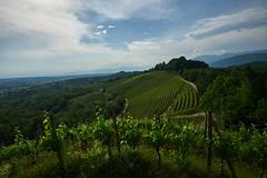 Savorgnano del Torre (paolo-p) Tags: nuvole clouds vigneti wineyards linee lines savorgnanodeltorre povoletto