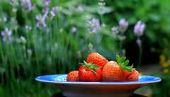 Starting the day (John (Thank you for >2 million views)) Tags: 7dwf closeupphotography strawberries homegrown catchycolours lavender garden stilllife red