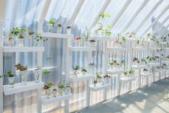 Puszczaj pęda (PanMajster) Tags: ziemniaki potato plants rośliny łódź design light pentax k3ii sigma 1835