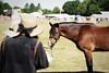 Parc Alfe being judged (vesterskov) Tags: daniel vesterskov foto photo fotografi photography sony a99 a99v slta99 slta99v full frame fullframe sigma 70200mm f28 28 ii ex dg apo macro hsm 70200 mm team pony power horses horse hest hesteliv heste dansk danish ponies riding ride welsh mountain cob