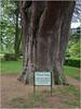 LR7-PEM51912 (JB89100) Tags: 2018 arbres hauterives ou quoi