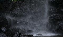 Australia_2018-194.jpg (emmachachere) Tags: subtropical trees hike waterfall boatride springbrook australia rainforest kanagroo animals koala brisbane boat lonepinekoalasanctuary