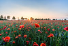 Poppy field (daniel_moeller) Tags: poppies poppy poppyfield mohn mohnfeld sonnenuntergang sonne sunset sun field sky himmel landscape landschaft sonyalpha6000 samyang12mmf2ncscs sachsen saxony deutschland germany europa europe