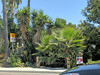 Carlsbad 6-8-18 (21) (Photo Nut 2011) Tags: carlsbad sandiego california