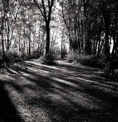 D'ombres et de lumière... (Argentique) / Light and shadows... (Film) (Pentax_clic) Tags: film • folder bessa minutes rollei 1947 66 voigtlander 2018 vaskar 400s warren 16 retro quebec juin robert nb bw argentique 120 d76 diy vaudreuil